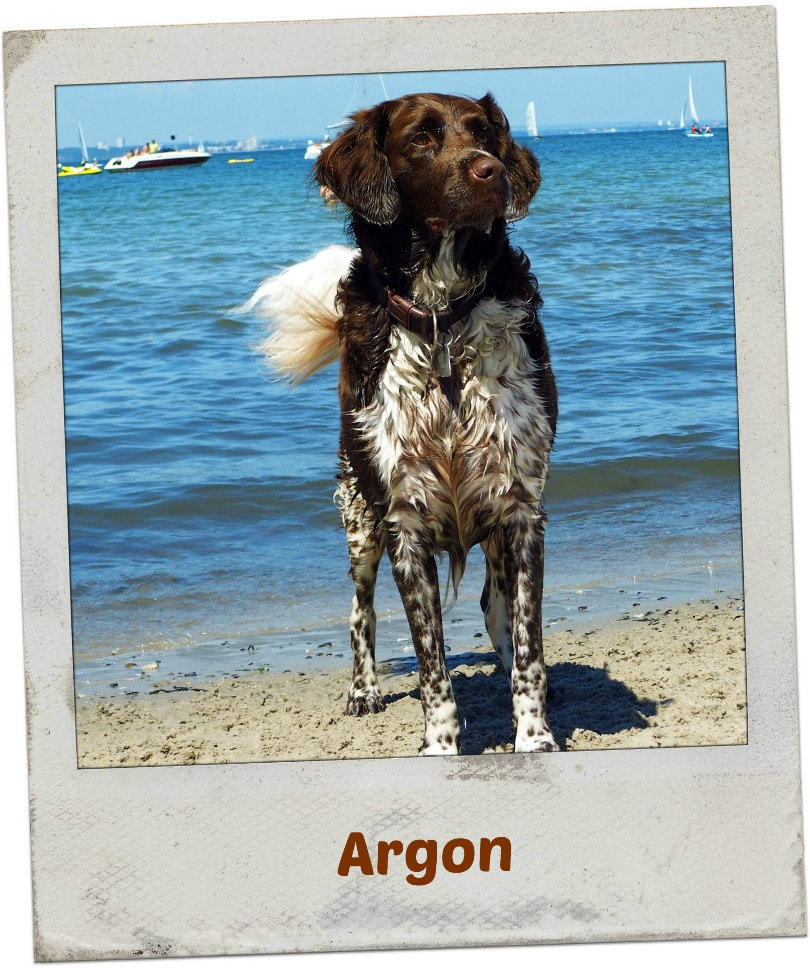 Argon am Hundestrand in Niendorf