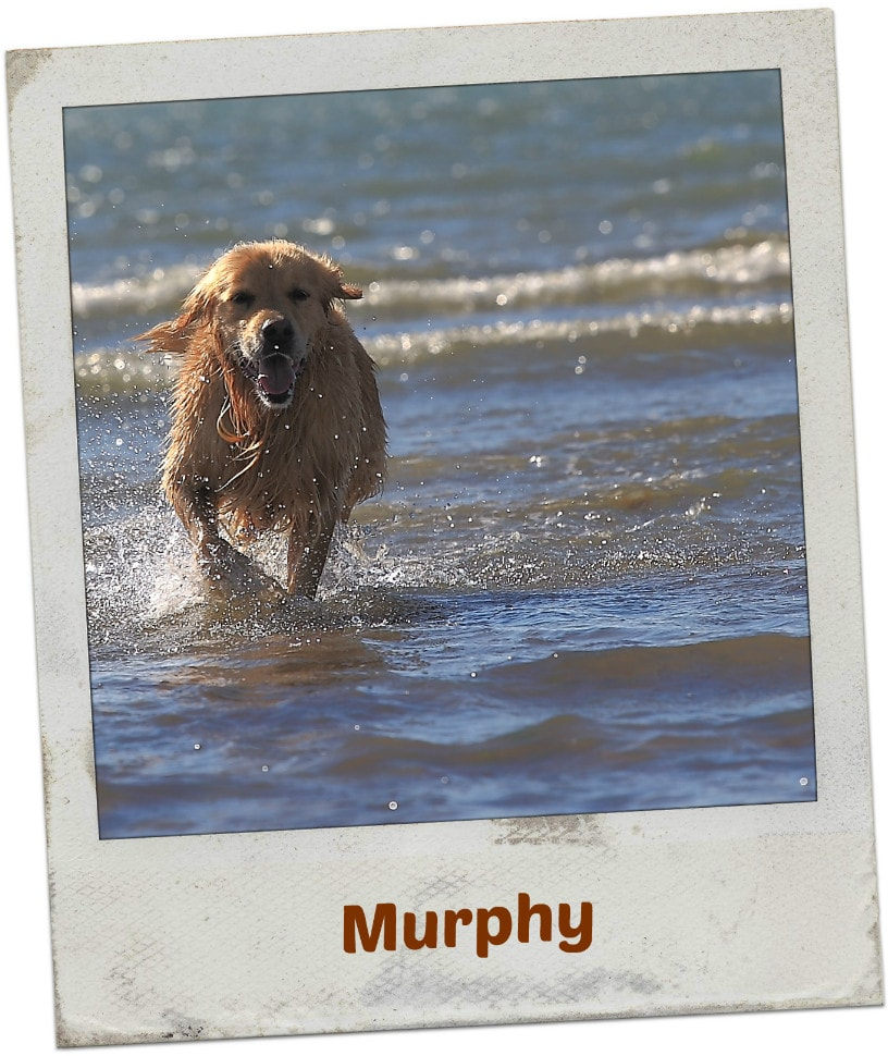 Murphy am Hundestrand in Reville
