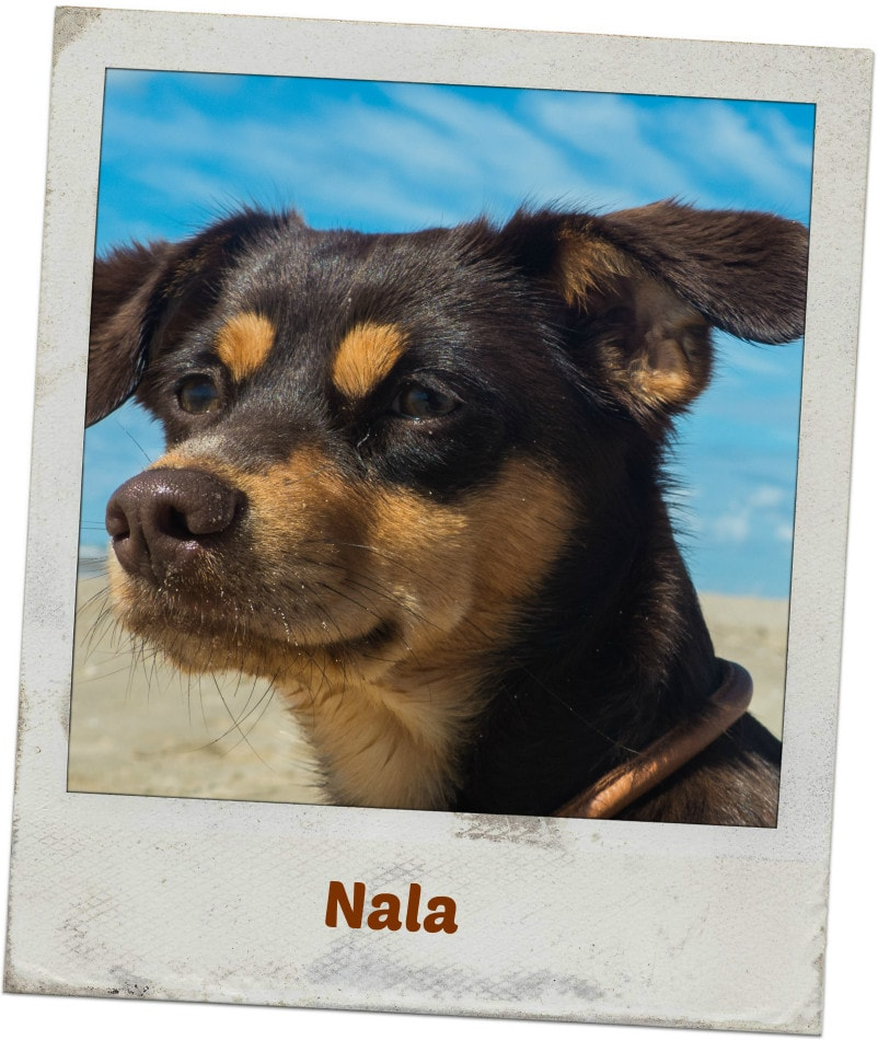 Nala am Hundestrand in Schoorl