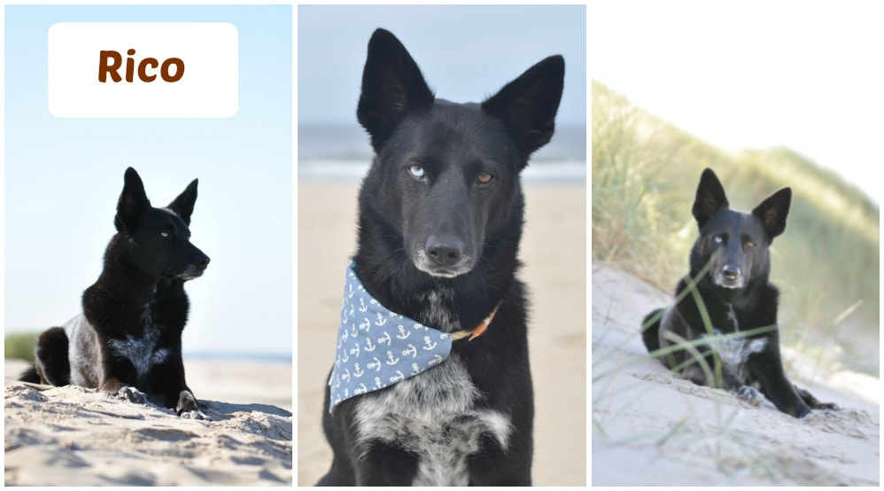 Rico am Hundestrand in Egmond aan Zee